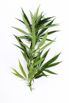 Planta de hoja de cannabis