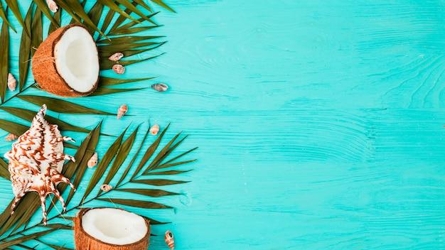Planta de hojas cerca de cocos frescos y conchas a bordo.