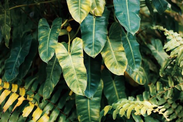 Planta de hojas con fondo.