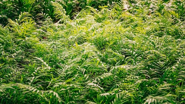 Planta con hojas verdes a la luz del sol.