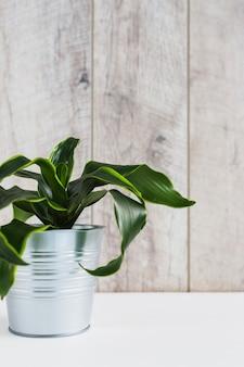Planta de hojas verdes rizadas en el contenedor de aluminio contra la pared de madera