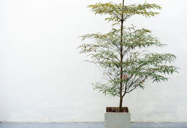 Planta de interior en una olla blanca