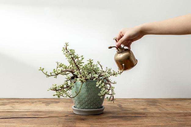 Planta de interior sobre una mesa de madera rústica
