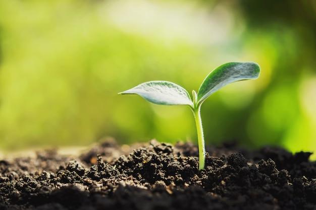 Planta joven nueva vida creciendo en jardín y luz solar.