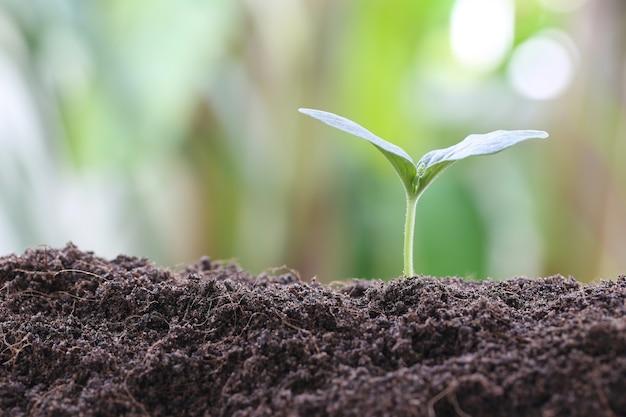 Planta joven o plántula verde en el suelo en el huerto.