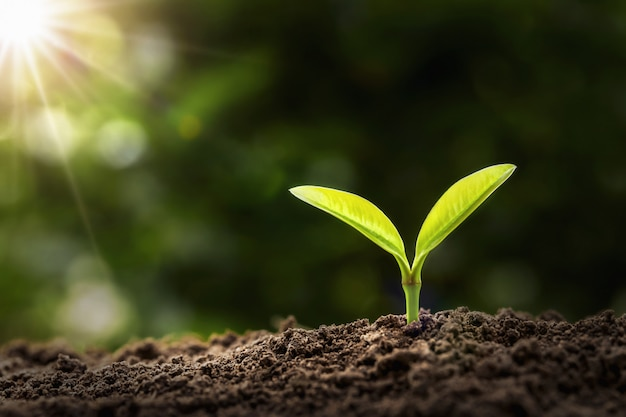 Planta joven que crece en luz de la mañana. concepto de agricultura y día de la tierra
