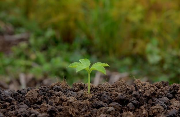 Planta joven que crece en la naturaleza