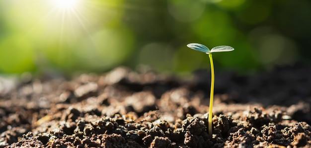 Planta joven que crece con la salida del sol.