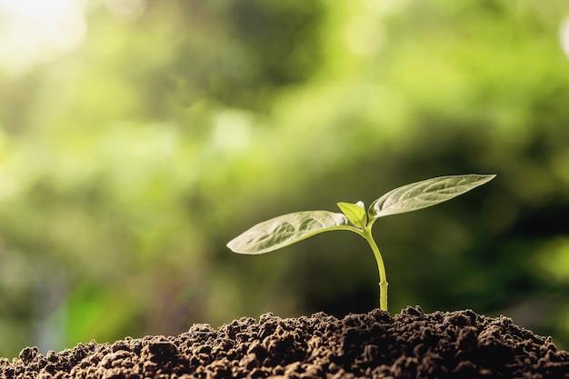 Planta joven que crece en suelos con luz de la mañana