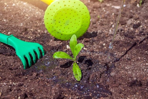 Planta joven sobre suelo negro y equipamiento de jardinería: rastrillo para bebés y regadera. día de la tierra del medio ambiente. salvar el planeta y el concepto de nueva vida.