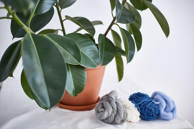 La planta y la lana sobre la mesa.