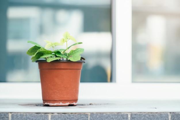 La planta en maceta fuera del edificio.