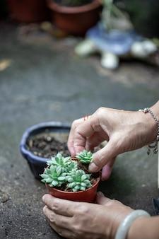 En una planta en una maceta en la mano