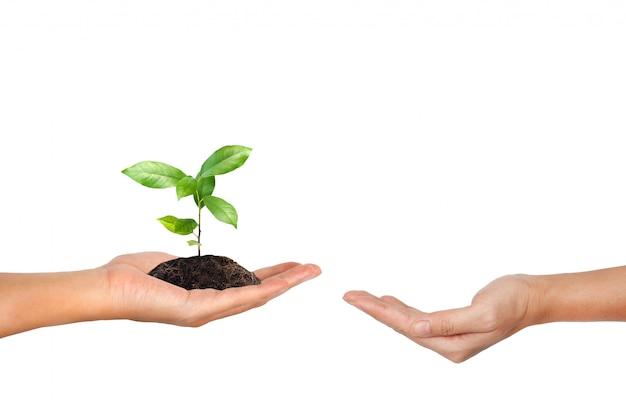 Planta en la mano aislada sobre fondo blanco.