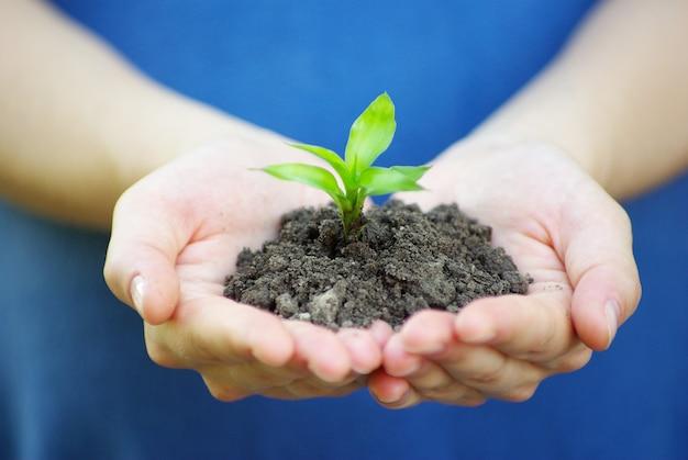 Planta en la mano con tierra.