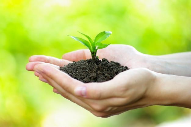 Planta en la mano