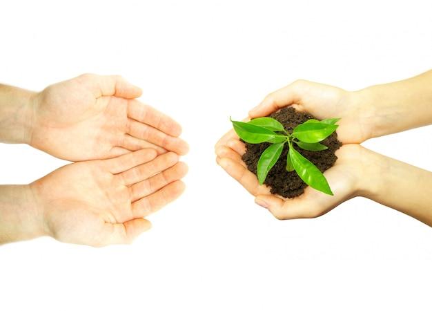 Planta en manos