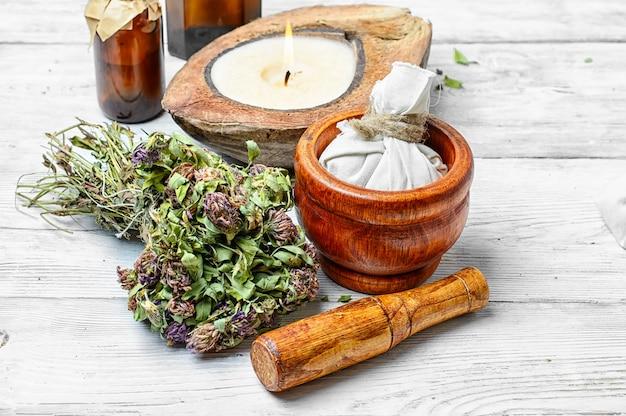 Planta medicinal trébol
