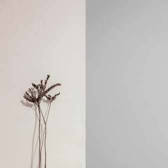 Planta mínima abstracta apoyada en una vista frontal de la pared