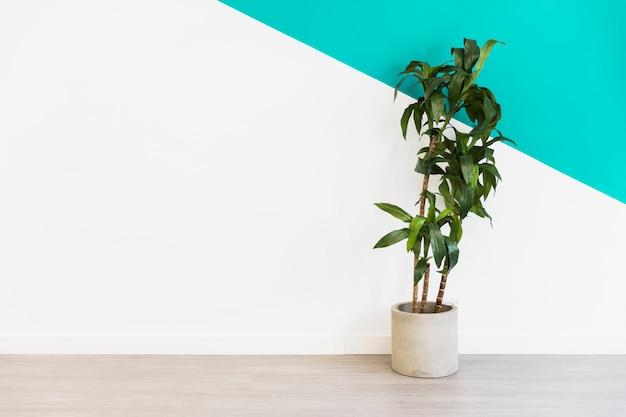 Planta de oficina delante de pared