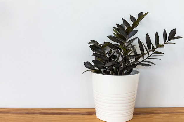Planta ornamental verde natural en una maceta blanca