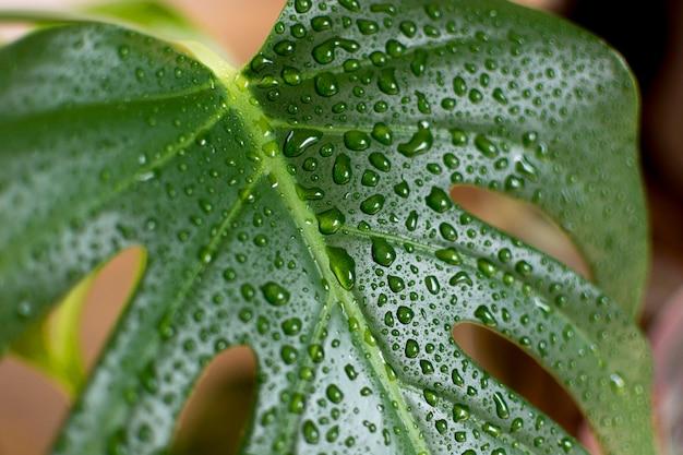 Planta con primer plano de gotas de agua