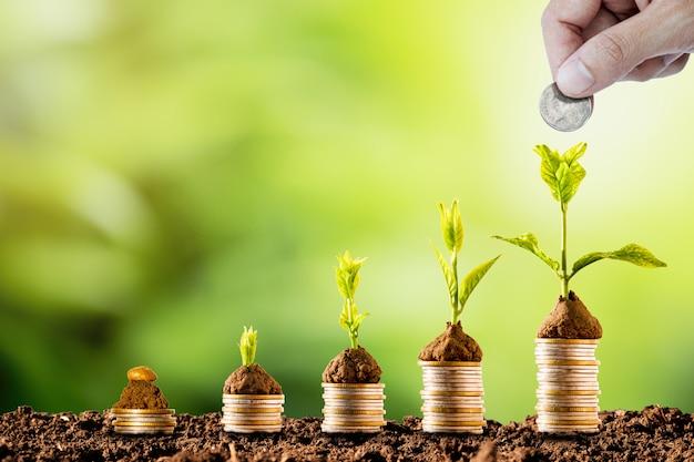 Planta que brilla intensamente en las monedas que apilan en suelo y vegetación. dividendo del depósito bancario y el concepto de inversión en acciones.