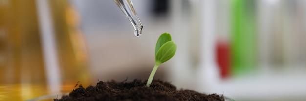 Planta que crece en condiciones de invernadero