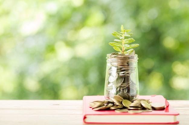 Planta que crece en monedas de ahorro