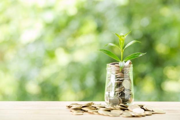 Planta que crece de monedas en el frasco de vidrio en la naturaleza borrosa