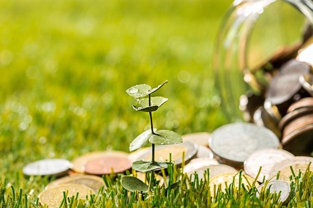 Planta que crece en monedas tarro de cristal por dinero en hierba verde