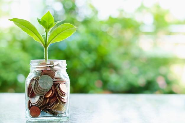 Planta que crece de monedas en el tarro de cristal en fondo natural verde borroso