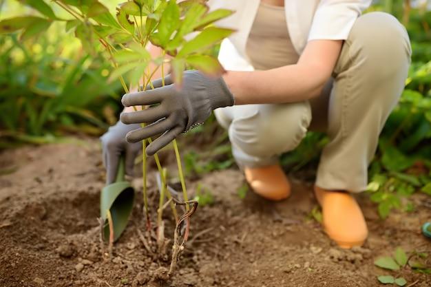 Planta de replantación de mujer en jardín.
