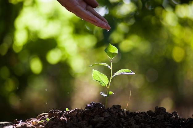 Planta de riego de mano de hombre