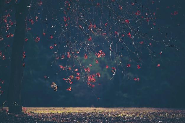 Planta roja, flor y hoja, paisaje forestal.