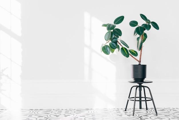 Planta sobre silla negra