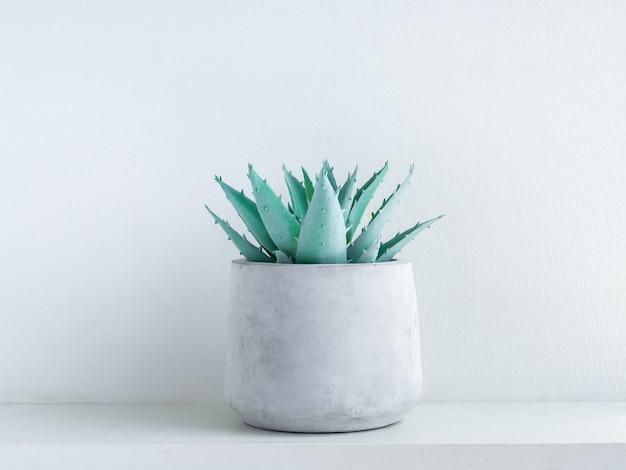 Planta suculenta de aloe vera verde en maceta de cemento geométrica moderna en estante de madera blanca sobre blanco