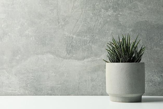 Planta suculenta en maceta sobre superficie gris