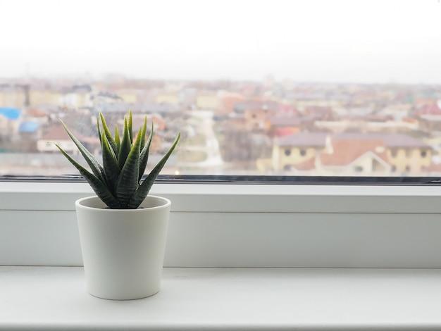 Planta verde en el alféizar de la ventana