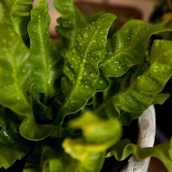 Planta verde de alto ángulo con primer plano de gotas de agua