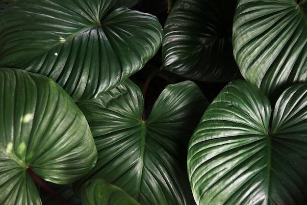 La planta verde deja la naturaleza