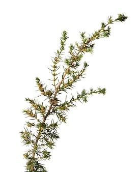 Planta verde con hojas frescas aisladas