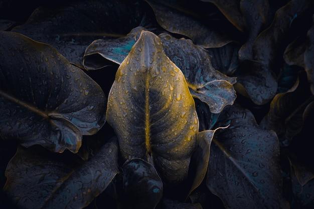 Planta verde hojas textura