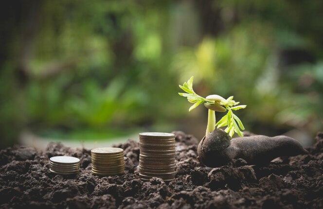 Planta verde joven con la moneda de la pila en la tierra para el concepto financiero creciente del negocio.