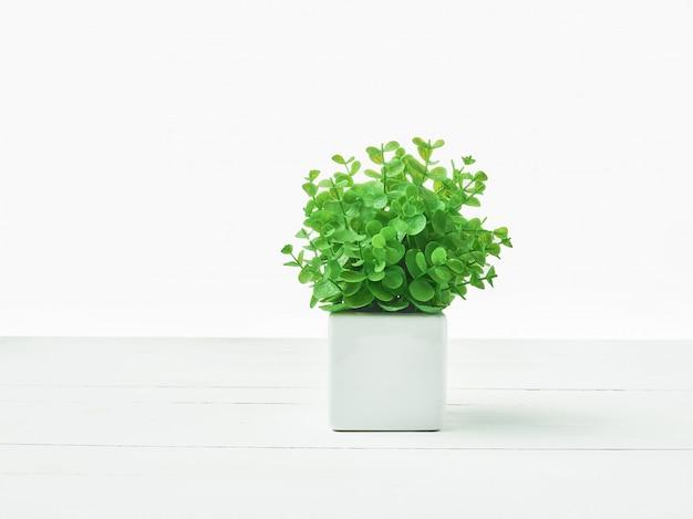 La planta verde en maceta