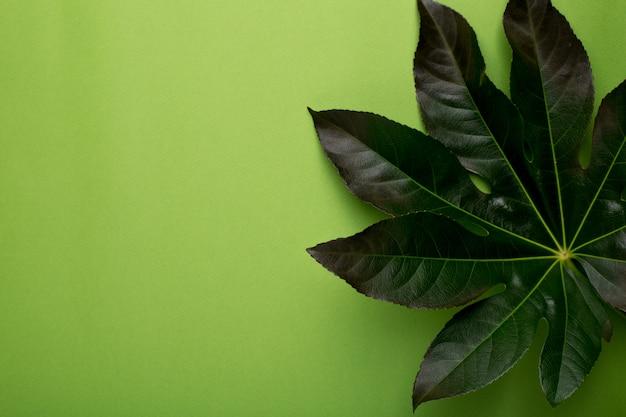 Planta verde o fondo verde