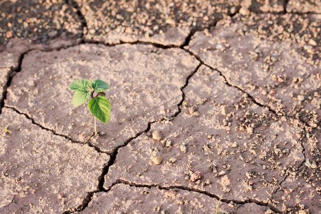 Planta verde que crece de las grietas en la tierra.