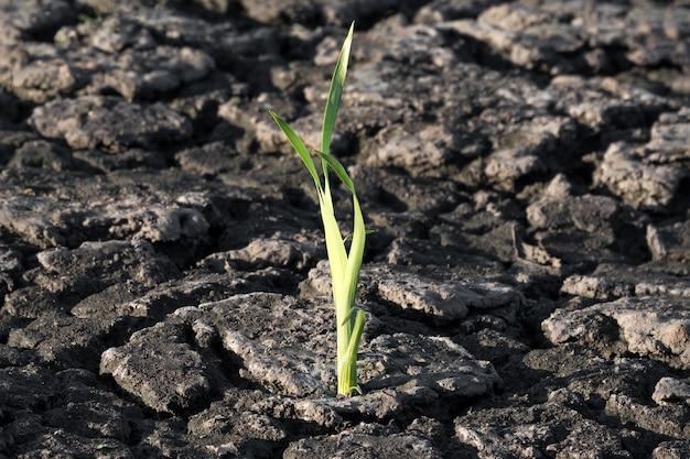 Planta verde que crece a través de grietas en el suelo