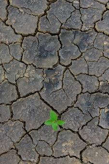 Planta verde que crece a través de suelo muerto.