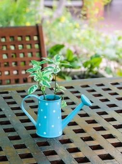 Planta verde en regadera en mesa de madera